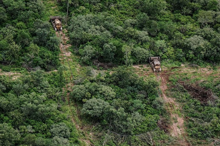 Anualmente se pierden cientos de miles de hectáreas de bosques nativos