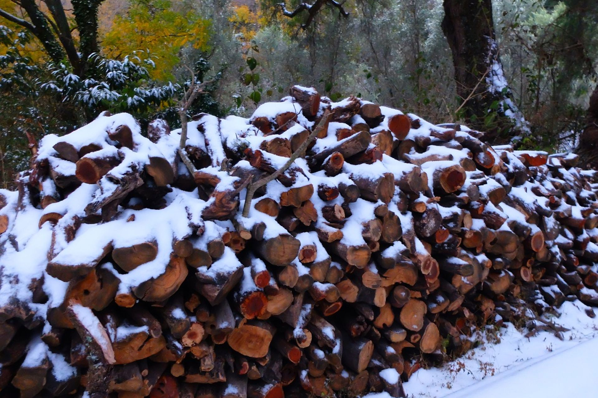 La leña para combatir el frío cubierta de nieve