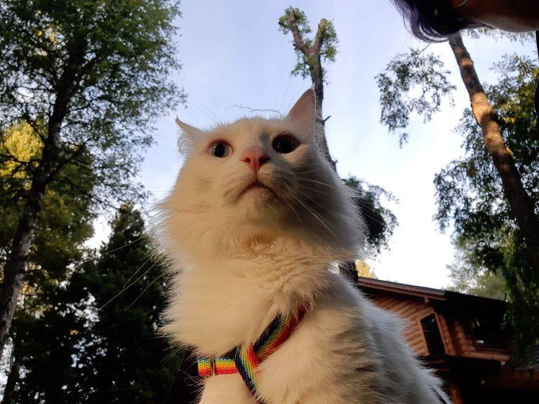 De la calle al bosque, aventuras de un gato que ama la tierra y come salmón