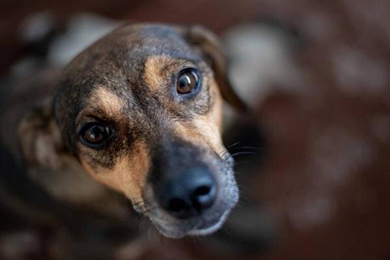 Carole Baskin fue otro de los nombres más usados en los perros en 2020