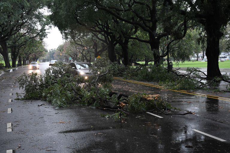 En distintos puntos de la Ciudad se desprendieron ramas de los árboles