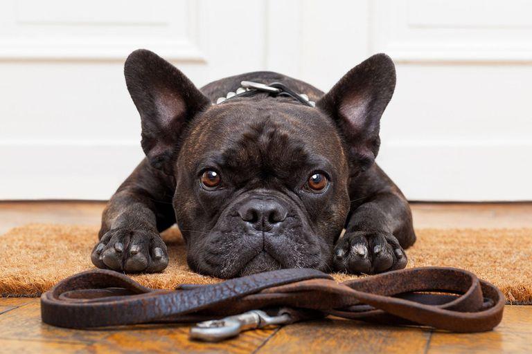 Los y las dueñas que mutilen a sus mascotas con fines tan solo estéticos tendrán, si se aprueba la ley, una sanción económica.