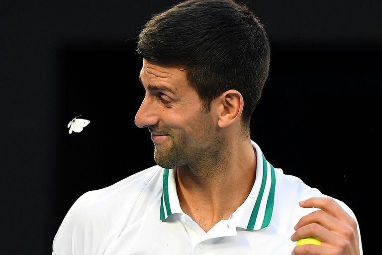 Djokovic: la mariposa que le dio suerte y los récords que todavía puede quebrar