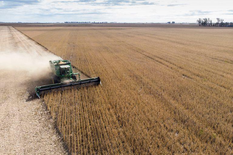Repuntó el valor de la soja en Chicago, tras un informe del USDA sin sorpresas