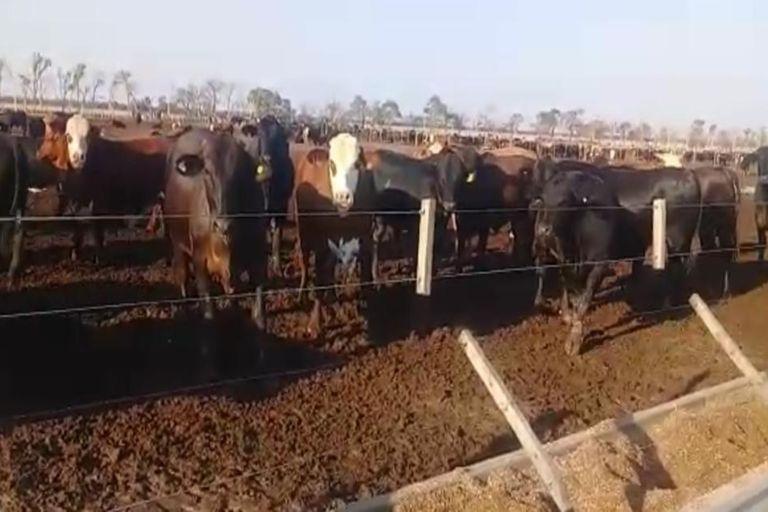 El caso de las 3500 vacas desaparecidas: ordenan detener a otro empresario