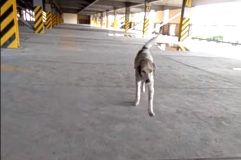 Tres meses después de perderse, un perro se reencontró con su dueño. El momento en el que el perro vuelve a los brazos de su dueño quedó registrado en un emocionante video que ahora se hizo viral