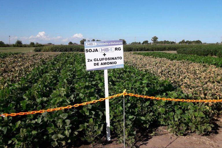 La firma tiene reservada para este año la siembra de 20.000 hectáreas con la tecnología