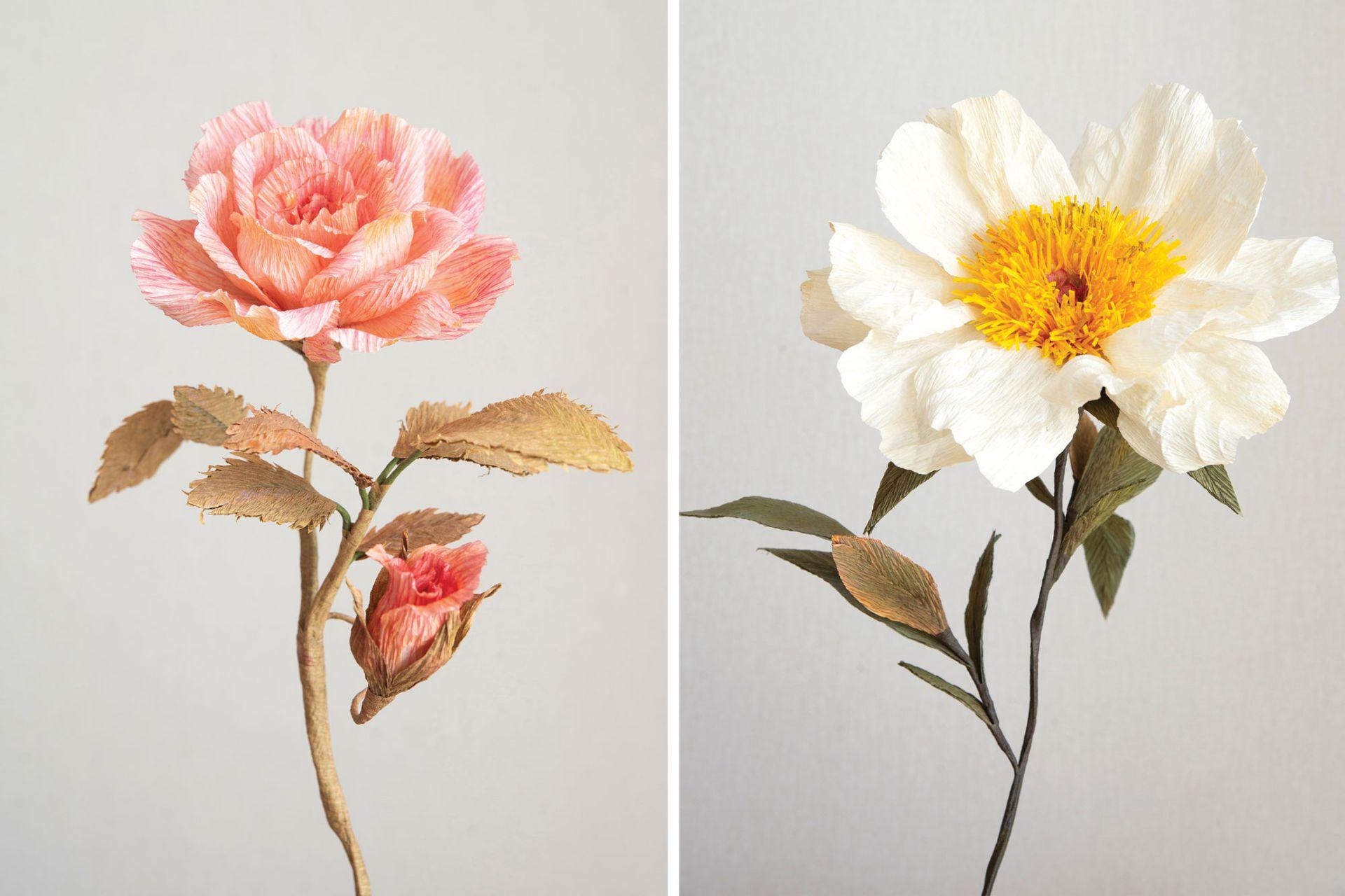 Izquierda: pimpollo de rosa híbrida de té. Derecha: peonía simple.