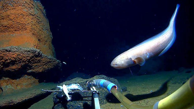 Los científicos encontraron una gran cantidad de vida en lo más profundo del océano