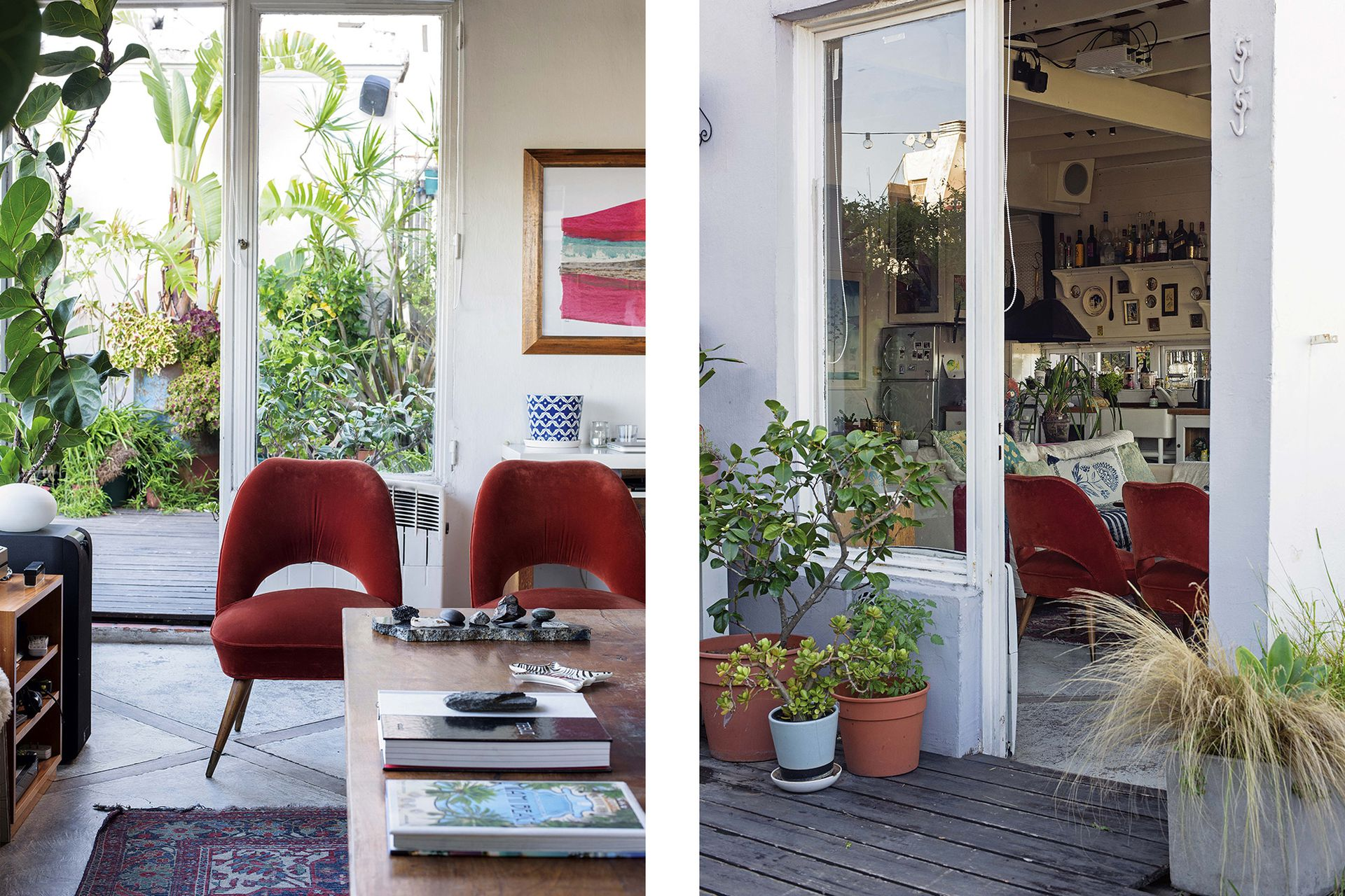 Ficus pandurata (vivero El Botánico) vinculan el interior con un afuera voluntariamente vegetal.