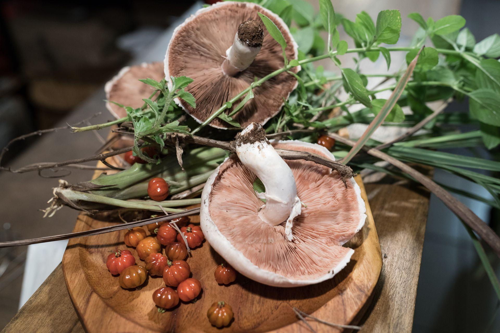 Variedad de hongos, pintanga y yuyos silvestres hacen a la propuesta gastronómica de Poytava.