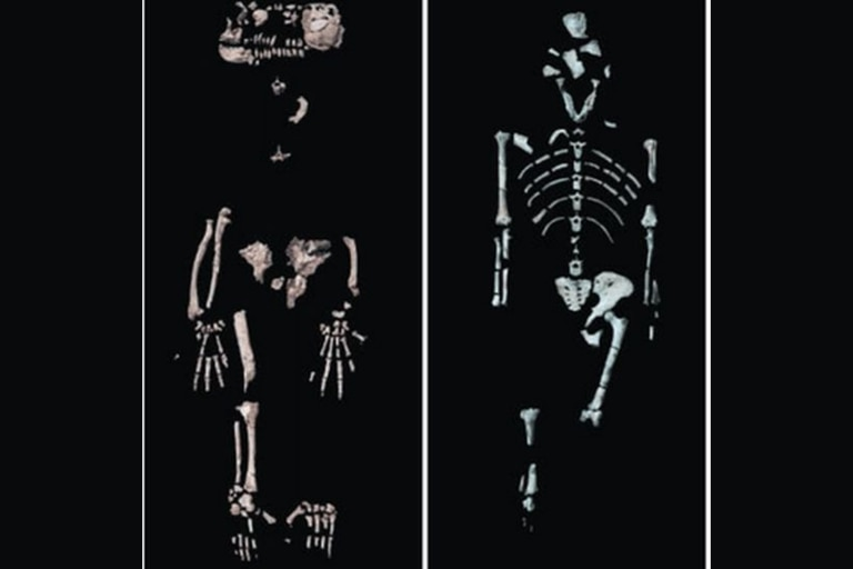 Ardi (izquierda) y Lucy (derecha) son dos antiguos miembros de la familia humana nacidos en Etiopía