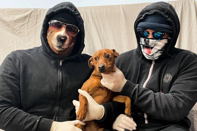 """Los secuestradores dispararon un estremecedor consejo a los propietarios de mascotas: """"No dejes correr a tu perro por delante tuyo, porque cuando doble la esquina antes que vos, podríamos estar allí"""""""
