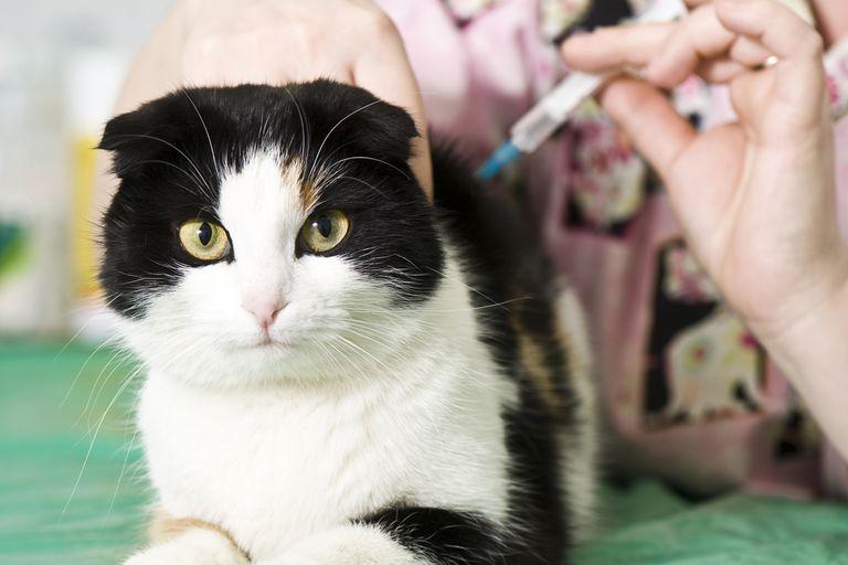 Una mujer falleció por rabia tras ser mordida por un gato callejero en Coronel Suárez