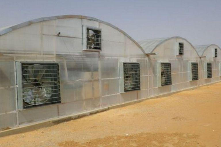 La tecnología japonesa permite la producción de tomate del desierto, como esta en Dubái