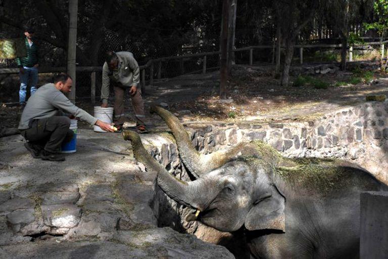 Las elefantas Pocha y Guillermina viajarán pronto al Santuario de Elefantes en Brasil