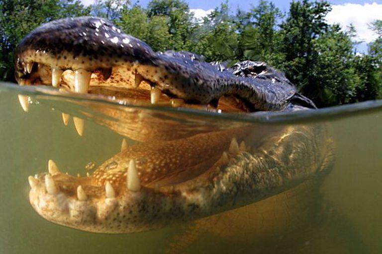 Los científicos investigaron el impacto de un gran cadáver de reptil en el lecho marino