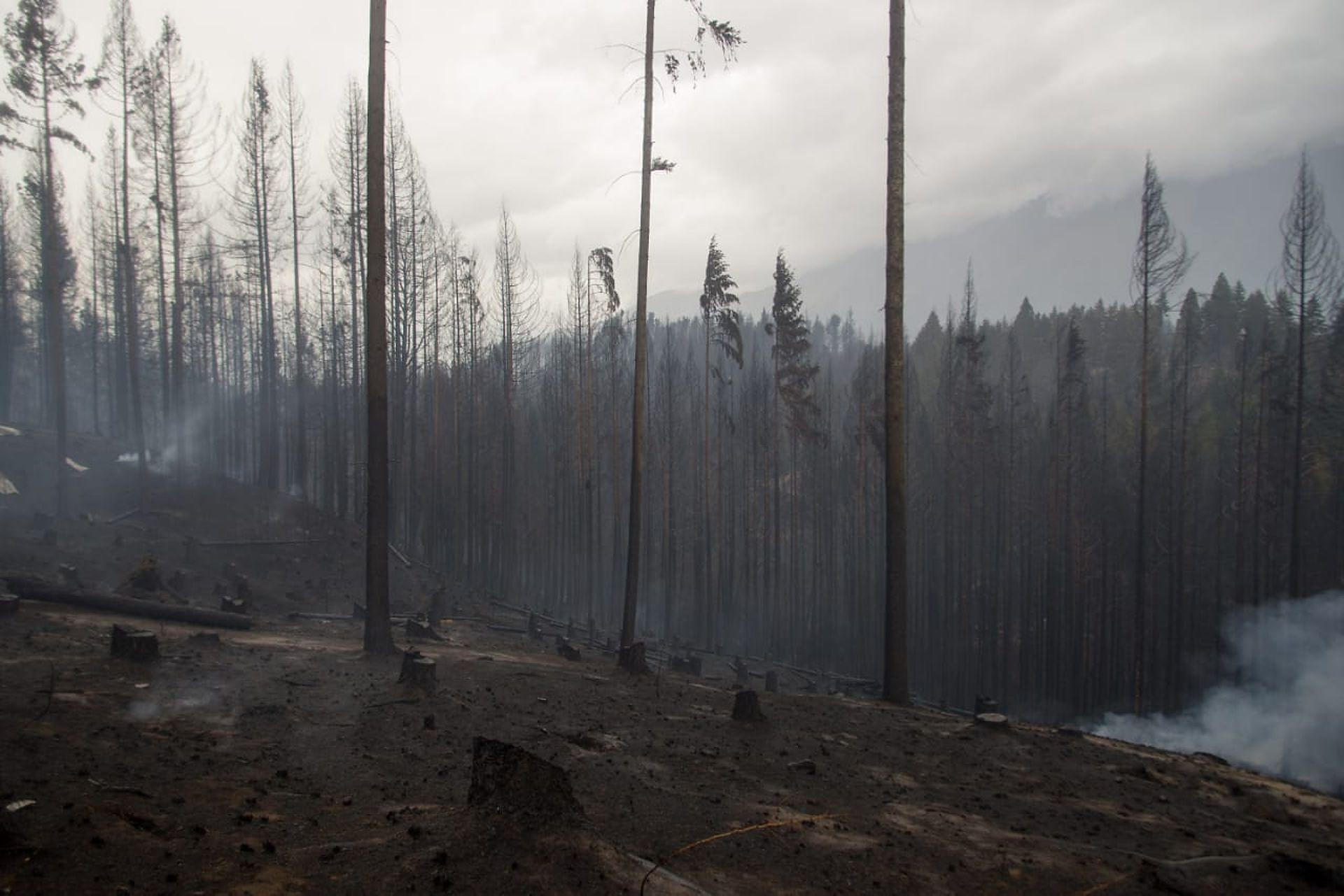 Los bosques fueron arrasados por el fuego