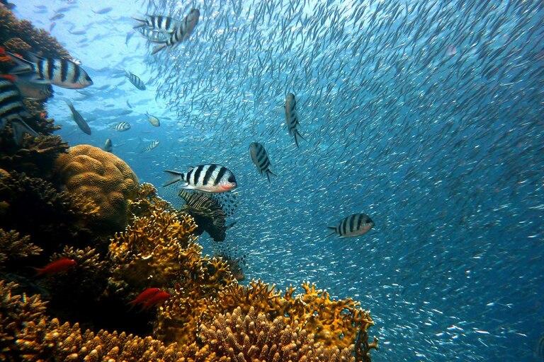Cuál es el significado de biodiversidad cuáles son los principales factores de alteración y generadores de cambio; explicaciones sobre la importancia de cuidar el ecosistema