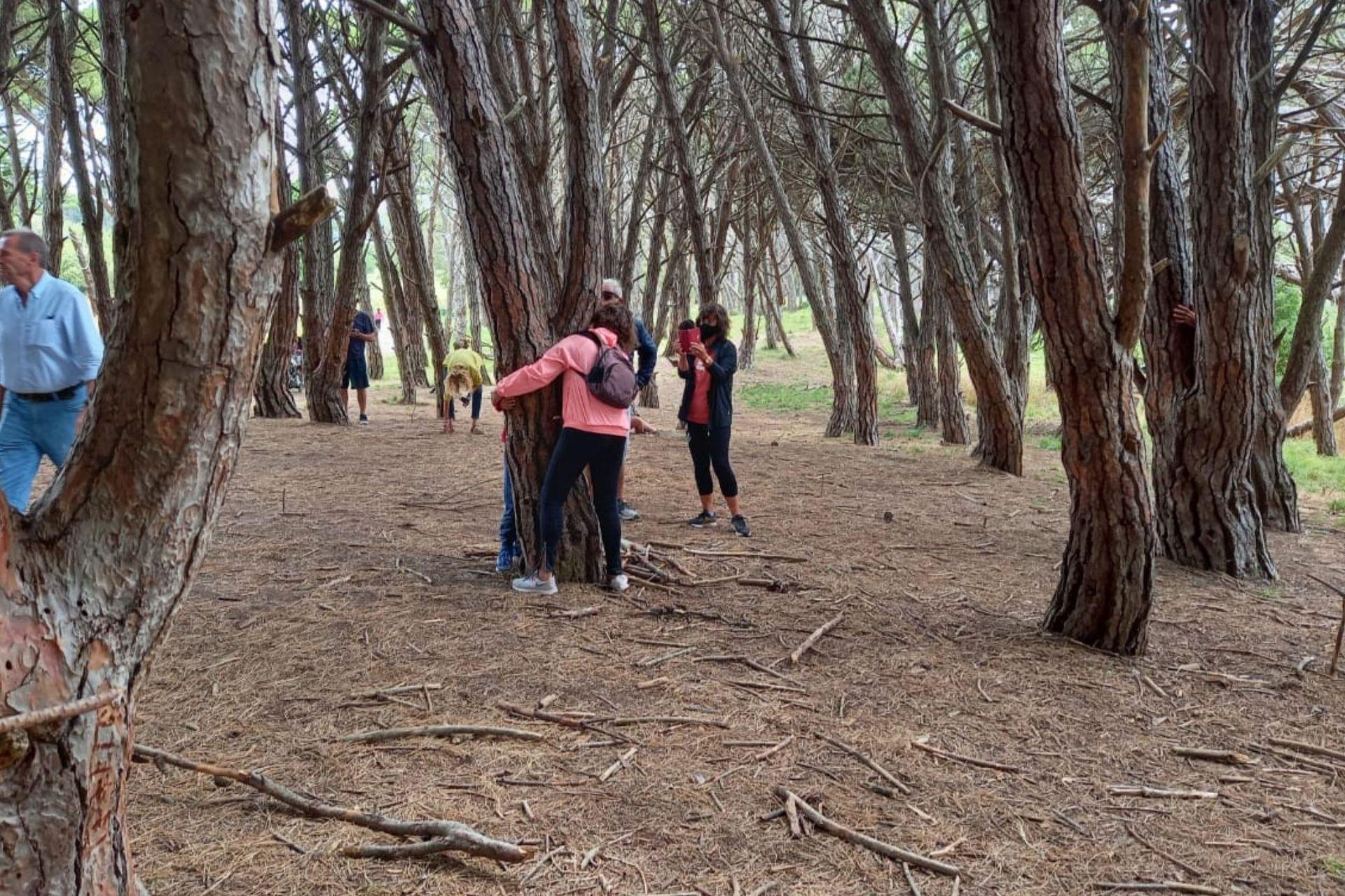 Abrazos a los árboles en el Bosque Energético de Miramar, una actividad muy común entre los visitantes.