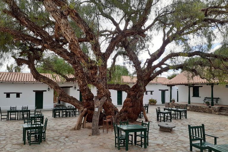 Aguaribay, molle o pimentero, los nombres de un árbol histórico