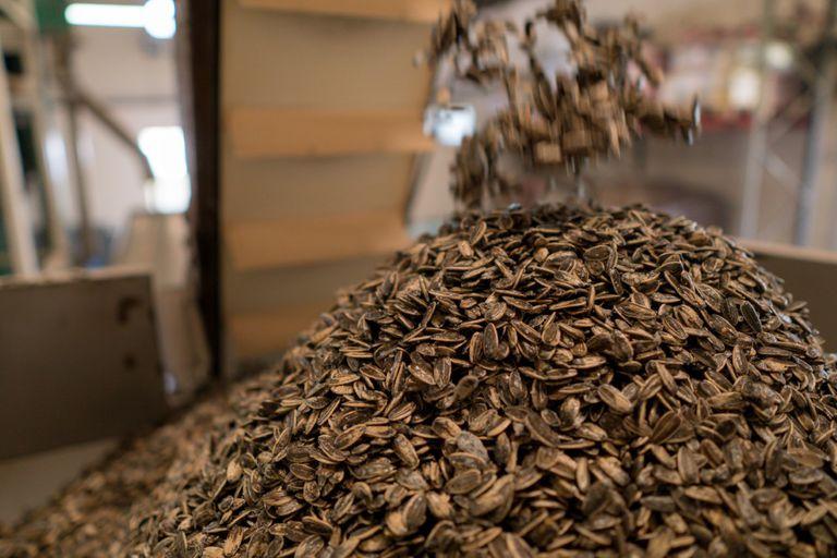 La empresa procesa 40.000 toneladas anuales de girasol.