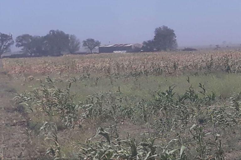 La sequía en Villa Iris, en el partido de Puan, provincia de Buenos Aires está afectando las producciones de la región