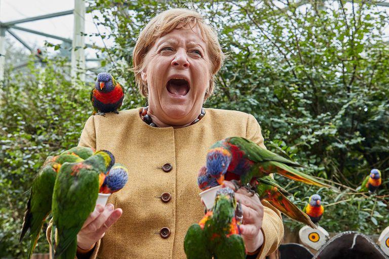 Merkel le pone humor a su despedida: el picotazo de un loro que se hizo viral