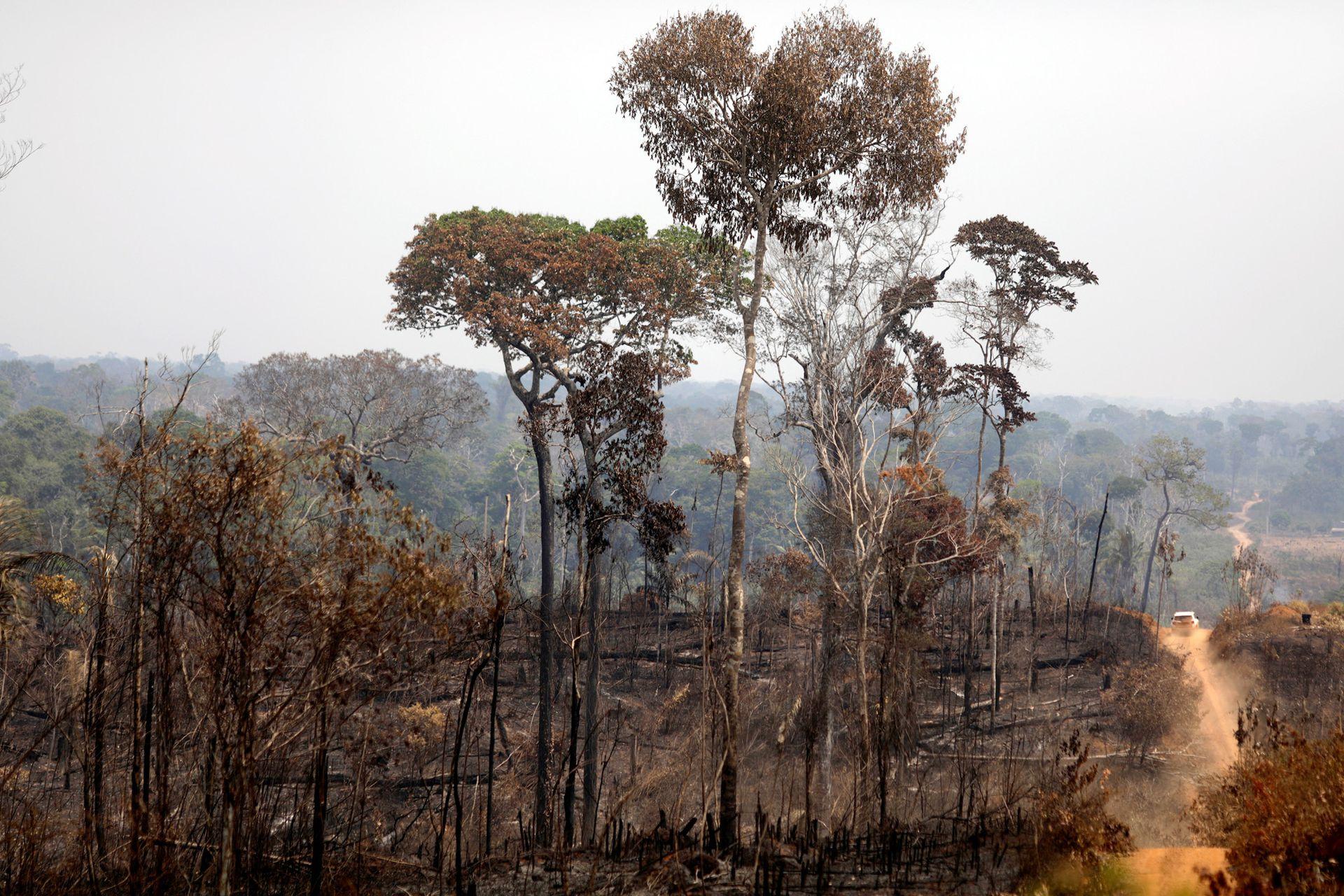 El fuego se inició hace dos semanas y amenaza con arrasar con la selva amazónica
