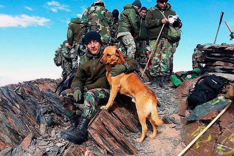 Perros de guerra, los mejores amigos del soldado; en la imagen, Cabo, el perro sargento
