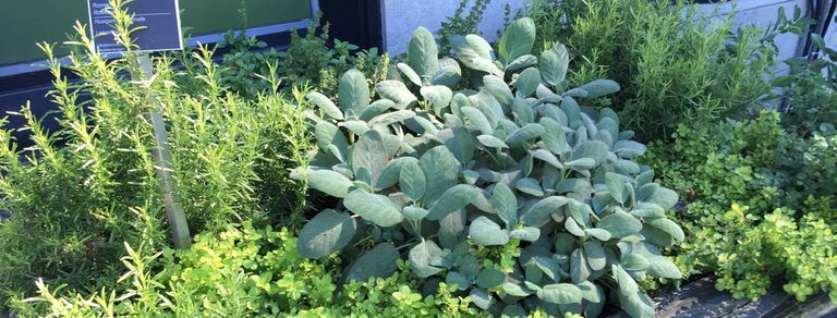 Claves para cultivar aromáticas en espacios pequeños