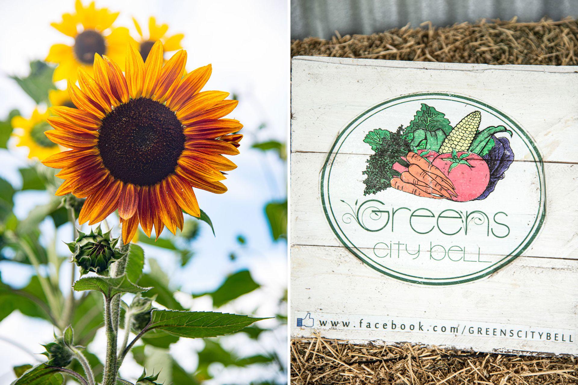 Como una manera de asegurar hortalizas frescas para sus platos, el paso de las estaciones y sus frutos determinan las propuestas que se van ofreciendo en Green City Bell a lo largo del año.