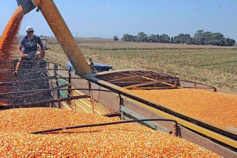 No maten al maíz