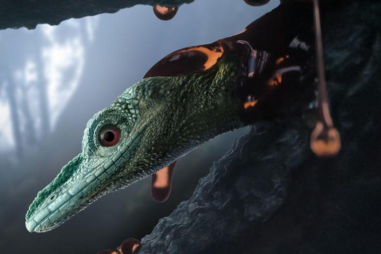El ámbar conservó los finos detalles anatómicos del Oculudentavis naga, incluidas las escamas en su mentón y alrededor de sus fosas nasales. Los investigadores estiman que el lagarto medía entre 5 y 7 centímetros de largo, sin incluir la cola