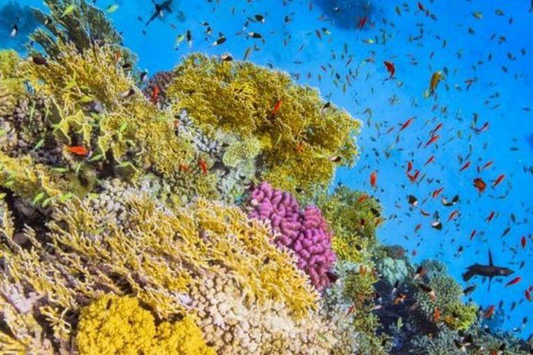Los montes marinos albergan una gran biodiversidad