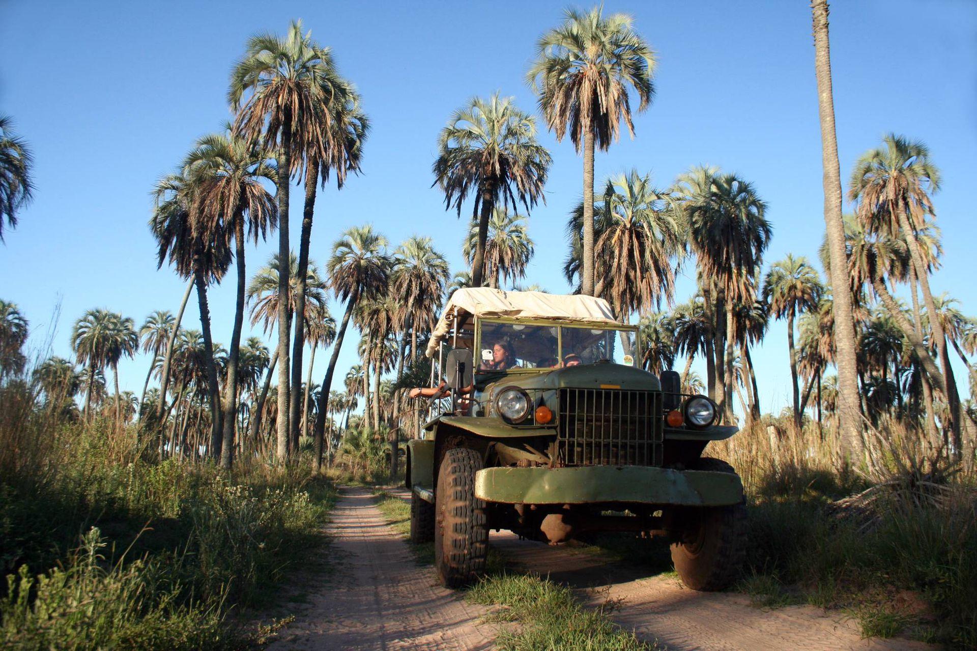 Excursión por la reserva de palmeras Yatay.