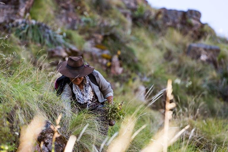 Sintientes, un documental ecológico que se estrena hoy en Puentes de Cine