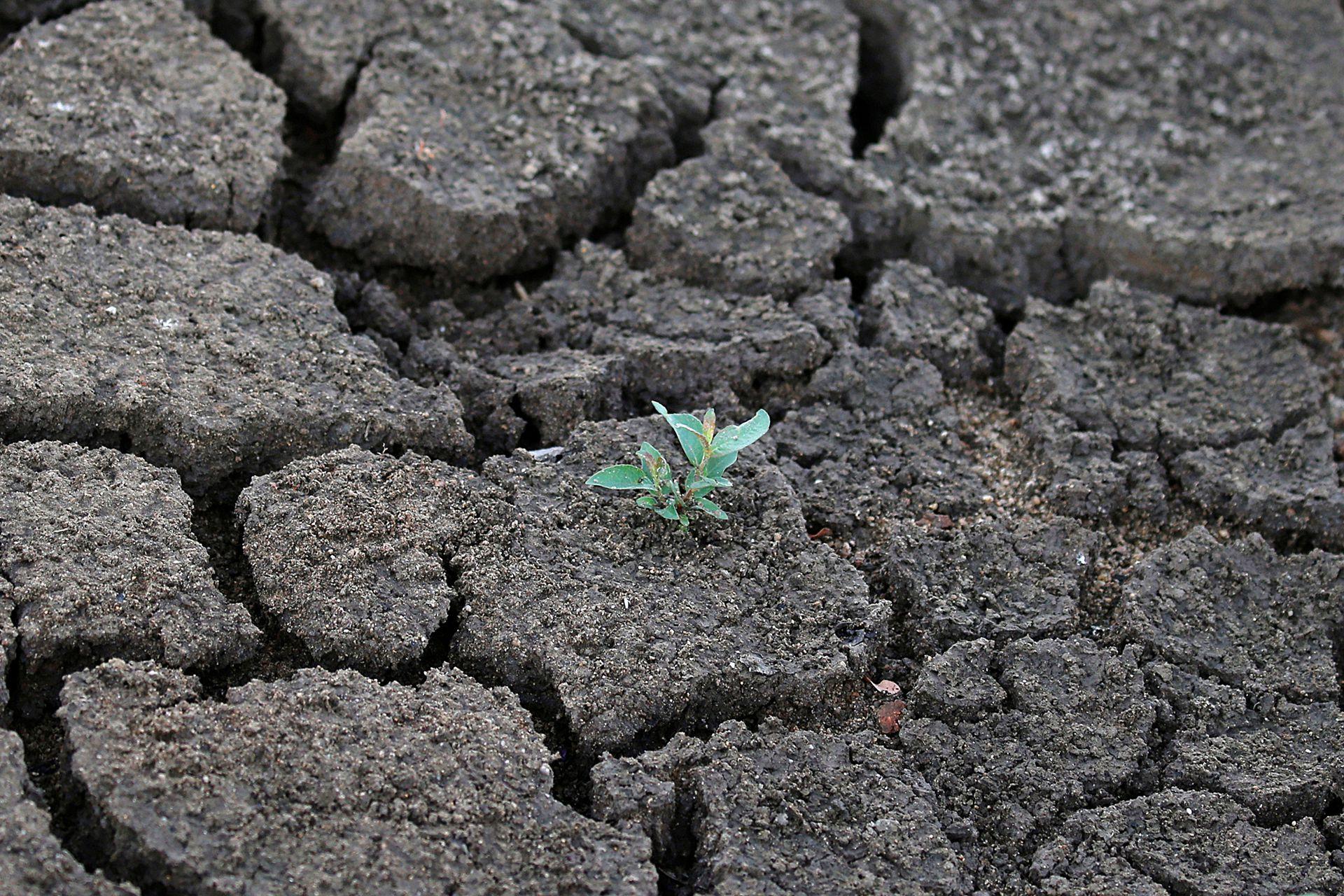 Sequía del estanque de las Landas en Lussat, Francia por la ola de calor que azota Europa