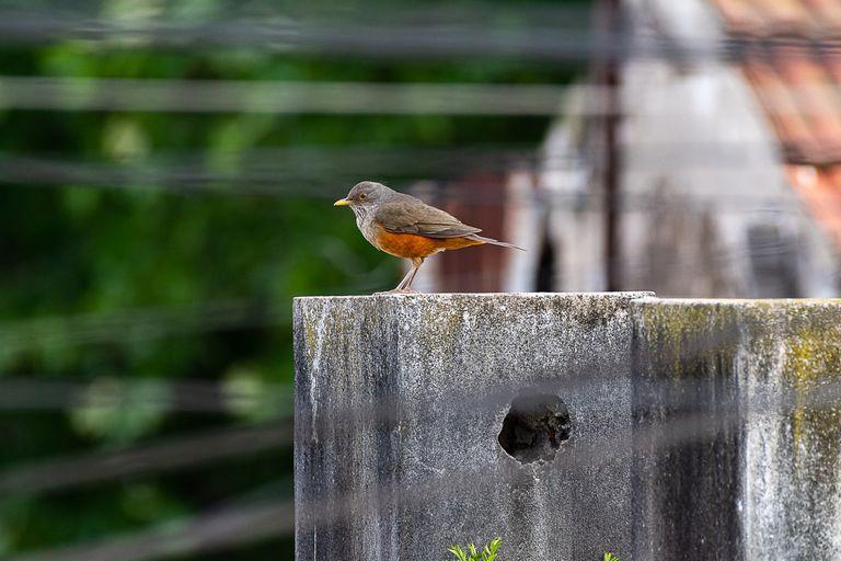 El aislamiento, una oportunidad para revincularse con la fauna urbana
